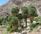 49 Palms Oasis